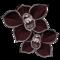 orchidee-noire.png?345680197